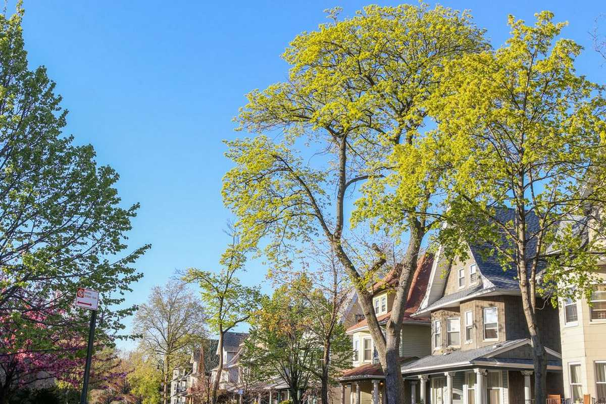 Flatbush neighborhood homes and trees