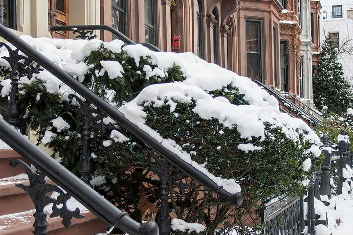 Stairs to a building and a bush covered in snow